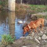 logroño logrono perrera perros atropello policia animalesrioja