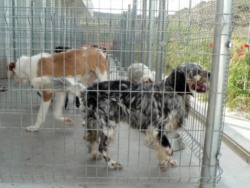 perros perrera logroño logrono policia