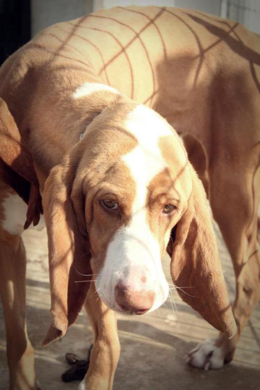 policia logroño logrono perros perrera