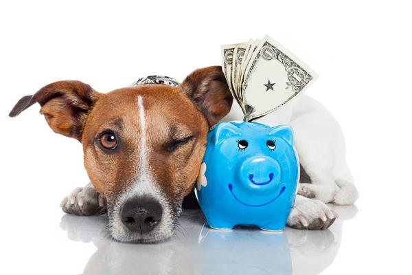 negocio, perreras, privadas, España